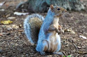 squirrel-1407699_1920